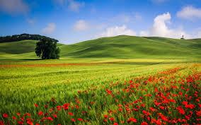 Как выращивать клубнику на подоконнике круглый год?