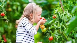 Почему комнатные цветы не распускаются и отваливаются