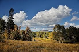Как выращивать рассаду овощей в домашних условиях?