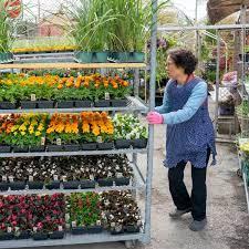В каком месяце пересаживать комнатные цветы