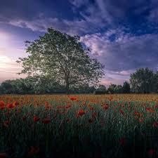 Как выращивать болгарский перец в домашних условиях?