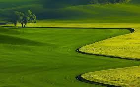 Выращиваем рыбу в домашних условиях
