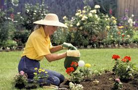 Комнатные цветы цветущие красным цветом