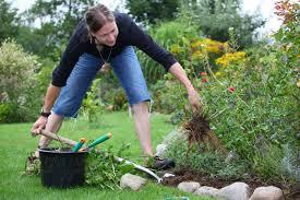 Домашние цветы пальмы названия