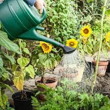 Правда ли что в америке нельзя выращивать овощи для себя