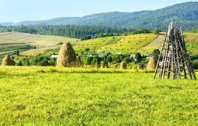 Комнатное вьющееся растение с цветами