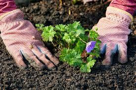 Биологические и физиологические особенности кроликов для начинающих