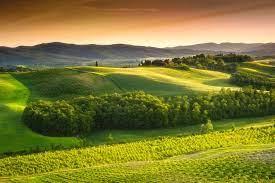 Подкормка жимолости весной для большого урожая: советы по выбору удобрения