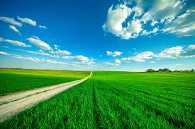 Как выращивать петрушку в домашних?