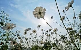 Можно поливать комнатные цветы дрожжами