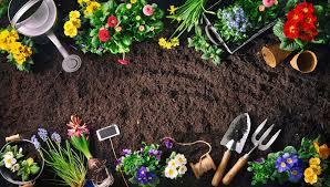 Ирландский виски лучшие сорта