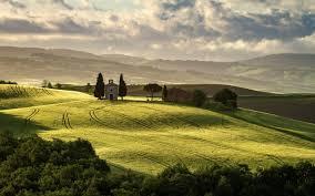 Как выращивать лук в домашних условиях из семян?