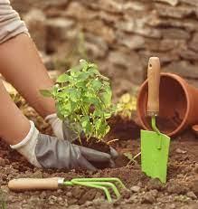 Орхидеи Какие можно выращивать в стеклянной вазе?