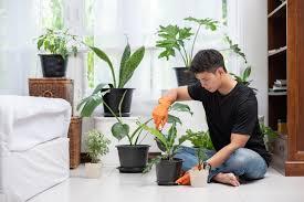 Домашнее растение с красными ягодами