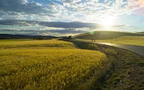 Освещение для растений в домашних условиях