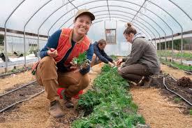Лучшие сорта позднего винограда