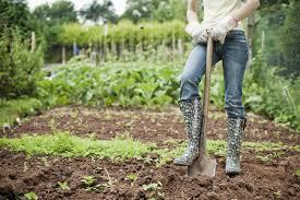 Выгодно ли выращивать картошку для малого бизнеса