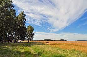 Разновидности сортов груш Сибири: описание и характеристика