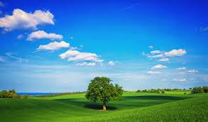 Про домашние растения