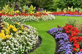 Какие комнатные цветы любят жару