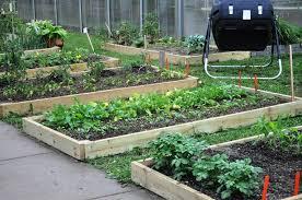 Как подготовить семена огурцов к посадке в открытый грунт?
