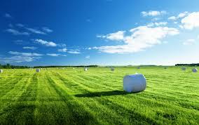 Комнатные растения которые можно выращивать в гидрогеле