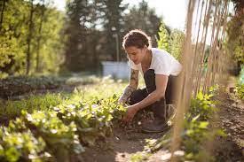 Почему не цветет комнатный цветок эухарис