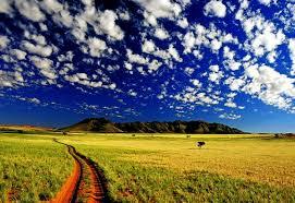 Йод для полива цветов комнатных рецепт