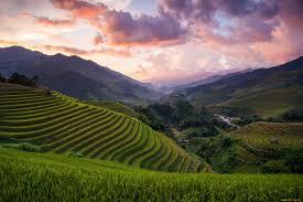 Хризантема садовая посадка и уход в открытом грунте