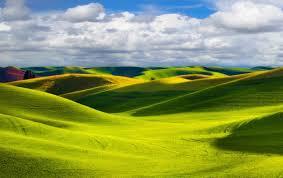 Лилия посадка и уход в открытом грунте осенью когда