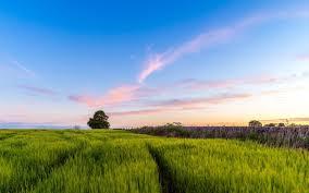 Пролиферация груши, методы борьбы с заболеванием