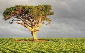 Выращивать елку в домашних условиях
