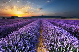 Крыжовник лучший зеленый сорт