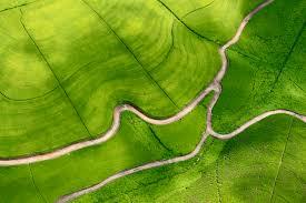 Лучшие сорта садовой черники
