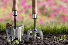 Какой сорт огурцов лучше выращивать на подоконнике?