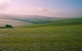 Растение бугенвиллия уход в домашних условиях