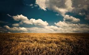 Какие грибы лучше выращивать в домашних условиях?