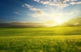 Самые хорошие сорта виски