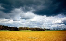 Лучшие сорта яблонь зимние сорта