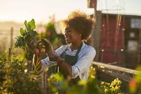 Как выращивать гладиолусы на даче и как за ней ухаживать?