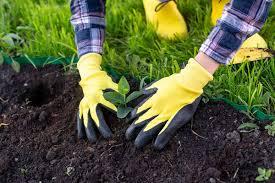 Лилейники крупноцветковые лучшие сорта