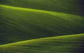 Как в домашних условиях выращивать орхидеи