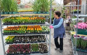 Как в выращивать клубнику в мешках в домашних условиях?