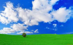 Можно ли выращивать мяту на подоконнике круглый год?