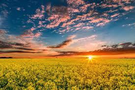 Как выращивать редис зимой в домашних условиях?