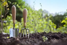 Как в домашних условиях выращивать руколу в?