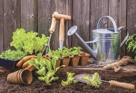Выращиваем лимоны в домашних условиях