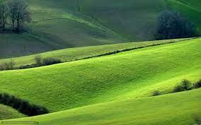 Какие лучшие сорта кофе?