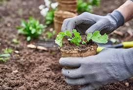 Полезные свойства и противопоказания сушеных плодов абрикоса