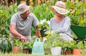 К чему снится поливать домашние цветы